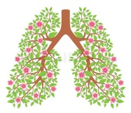 6271970-lungs-healthy